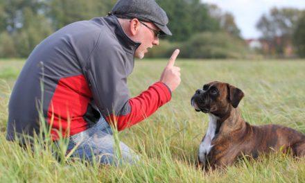 Le collier de dressage : est-ce mieux pour votre chien ?